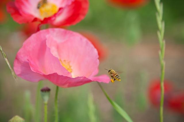 キャンプなどアウトドアで蜂に出会わないための個人的戦略マニュアル
