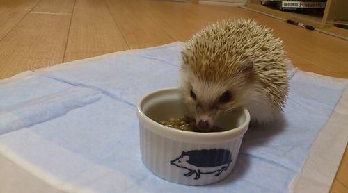 hedgehog-title
