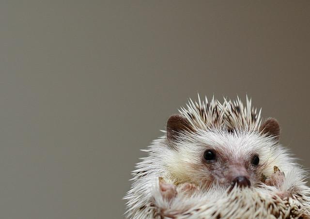 あると便利なハリネズミ飼育グッズ6つを一挙公開!