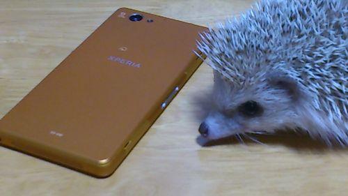 osamu-smartphone